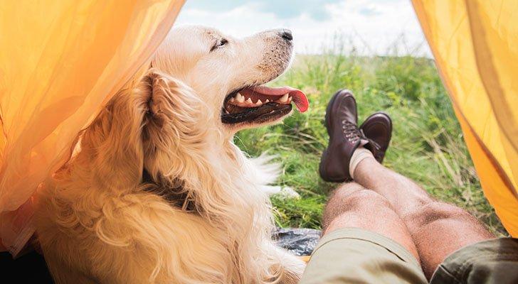Backpacking mit Hund: So bereitest Du Dich richtig vor!