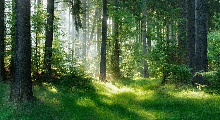 Waldluft: 8 Gründe, warum der Wald Dein Immunsystem stärkt